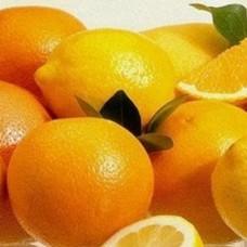 Citrus Explosion Perfumery Base