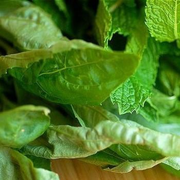 Green Perfumery Base 100% Natural